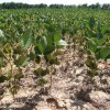 Declararon la emergencia agropecuaria por sequía en Corrientes y Santiago del Estero