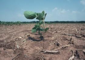 En 2015 por la caída de la soja dejarán de ingresar 4000 M/u$s: el ajuste será trasladado sin anestesia al sector privado