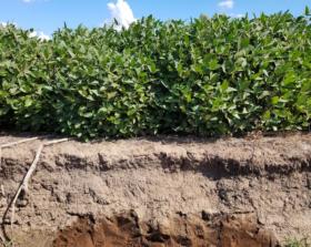 Balance de nutrientes: en el norte del país el suelo sigue siendo la principal fuente de nitrógeno mientras que en el sur el fertilizante se aplica por demás