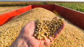 En condiciones equivalentes a las del Mercosur la soja argentina ya valdría 390 u$s/tonelada