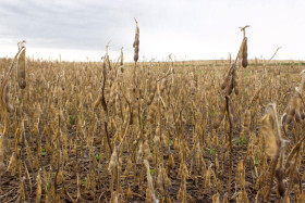 """Bienvenidos a Costa Pobre: con el ingreso de la cosecha se acabaron los """"premios"""" en soja justo cuando el gobierno pisa el tipo de cambio"""