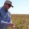 Locura granífera: el sorgo 2020/21 ya vale 10 u$s/tonelada más que el maíz