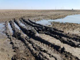 Los productores estadounidenses inundados cuentan con un seguro subsidiado que garantiza un ingreso mínimo: cómo funciona