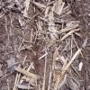 Buena noticia para zonas necesitadas de agua: domingo y lunes con súperlluvias en la región pampeana