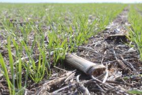 """Crean un plan nacional para determinar el """"estado de salud"""" de los suelos agropecuarios"""