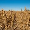Gracias productores: con los rindes de soja logrados en la zona núcleo muchos pagarán casi lo mismo de retenciones que el año pasado a pesar del derrumbe de precios