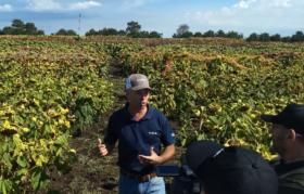 Determinaron nuevas remuneraciones mínimas para trabajadores semilleros con un ajuste anual promedio del 45%
