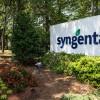 Otra demanda más contra Syngenta por la comercialización de maíz Agrisure Viptera: productores iniciaron una acción colectiva