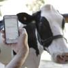 """Inteligencia artificial aplicada al agro: """"Así como podemos hablar con las vacas, mañana vamos a poder hacerlo con la soja o las cosechadoras"""""""
