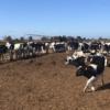 Alerta comercial: la lechería argentina se encamina hacia un nuevo escenario de sobreoferta que podría deprimir los precios