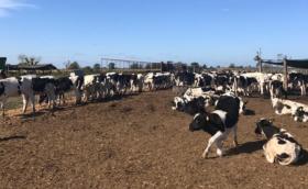 Comenzó a mejorar el precio relativo de la leche: pero falta bastante para alcanzar los niveles registrados en 2019