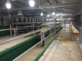 CIL asegura que las Pymes queseras que evaden impuestos potencian el impacto del déficit de leche