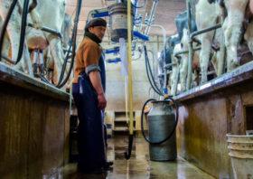 Un relevamiento realizado por CREA detectó un crecimiento de los contrastes presentes en el agro argentino
