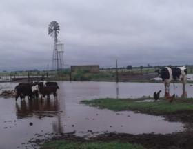 Feliz día del tambero: se necesita un marco comercial que promueva la producción de leche con altos estándares de calidad