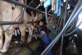 Cuidado con la desinformación pública: Argentina no cuenta aún estadísticas oficiales sobre producción de leche