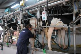 En el último año el precio de la leche recibido por el tambero uruguayo acumula una caída del 38%: el gobierno oriental salió a rescatar al sector