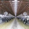 El tambo estabulado de Adecoagro ya cuenta con más de 6000 vacas que producen 34 litros diarios por cabeza