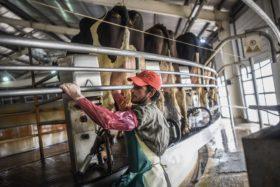 Adecoagro consiguió 100 M/u$s de la corporación del Banco Mundial para invertir en el negocio lácteo argentino