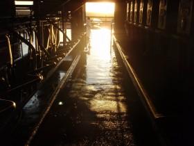 Sigue mejorando el precio relativo de la leche: pero el sector se mantiene gracias al subsidio aportado por los productores maiceros