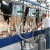 Brasil redujo cuatro veces su déficit comercial lácteo: también comenzó a competir con Argentina y Uruguay en el mercado internacional
