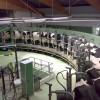 Crisis lechera: en el primer trimestre del año el tambo de Cresud perdió 5,0 millones de pesos