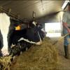 Casi 44.000 tamberos europeos aceptaron recibir subsidios para reducir voluntariamente la oferta de leche