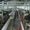 Se acabó oficialmente el subsidio maicero para tambos: quedó al descubierto el pobrísimo poder de compra de la leche