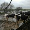 Alerta climática: esta semana regresan las precipitaciones abundantes en zonas afectadas por inundaciones