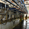 """Alberto Fernández aseguró que """"el productor de leche no tiene nada de insumos en dólares"""": pero no es cierto"""