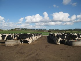 Con la mayor producción el valor de la leche medido en moneda maíz regresó a una relación de equilibrio