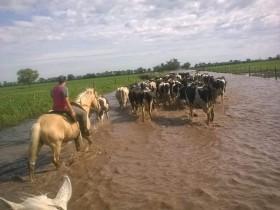 El año arrancó con un desastre climático en la cuenca santafesina luego de que la producción nacional de leche cerrara el 2016 con una baja del 13%