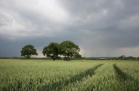 La probabilidad de lluvias seguirá concentrándose en el sector este del país