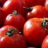 El tomate brasileño está ingresando a un precio promedio de 2,20 $/kg