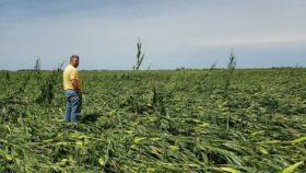 Una tormenta intensa afectó más del 40% del área agrícola de Iowa: aún resta estimar el daño total en maíz