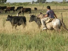 El salario promedio registrado en el sector agropecuario argentino es de casi 8400 pesos brutos