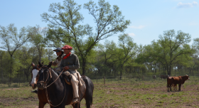 El salario neto promedio registrado en el sector agropecuario argentino es de 12.400 pesos