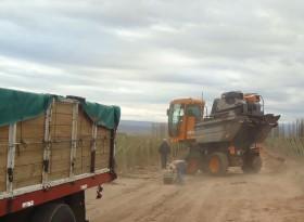 El salario promedio registrado en el sector agropecuario argentino es de 5513 pesos brutos