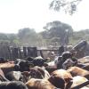 #ElCampoNoPuedeParar: todos los trabajadores de la cadena agroindustrial argentina quedan exceptuados de la cuarentena obligatoria
