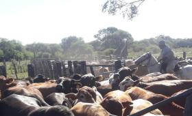 Argentina insólita: campo, minería e industria lideran la destrucción de empleo