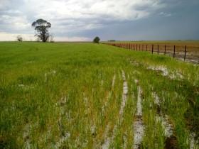 Hasta el miércoles de la semana que viene se prevén acumulados de precipitaciones de hasta 60 milímetros en la zona pampeana