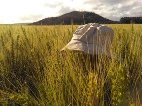 Alerta trigo: el fin de semana se prevé el ingreso de una nueva ola de aire frío sobre el sur bonaerense