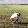 Pautas para maximizar la eficiencia de fertilización en trigo
