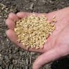Molinos, Don Mario y Klein figuran en el listado de empresas que no pudieron validar el origen legal de la semilla de trigo de uso propio