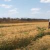 Brasil trabaja en el desarrollo de un trigo tropical para intentar reducir la dependencia del cereal argentino