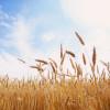 Súper inversión: en el último año la rentabilidad del trigo fue un 230% medida en pesos constantes