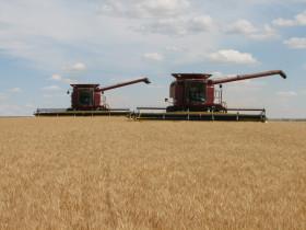 Fracasó la cosecha de trigo en el norte argentino: el cereal se negocia con valores de hasta 3400 $/tonelada
