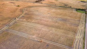 Factores alcistas pasan de largo para el trigo: traders ingresan a la cosecha con 40% del saldo exportable comprado