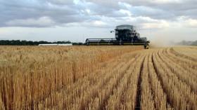 Se evaporó el saldo exportable de trigo argentino: los precios internos tenderán a ubicarse en la paridad de importación
