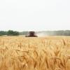 El Ministerio de Agricultura dijo que la primera estimación de cosecha de trigo fue errónea: los precios siguieron subiendo