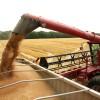 Aparecieron las primeras ofertas de trigo segregado en la región pampeana: se prevén bajos niveles de proteína por súper rindes en la zona núcleo